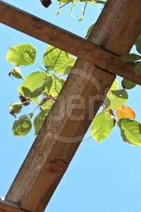 Pergolas like this can support growing vines and flowering plants.