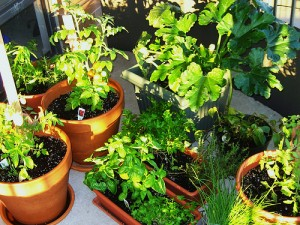 See how organized and bountiful a patio garden can be.