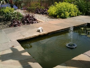 A simple clean look provided by a solar fountain.
