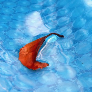 A great shot of a swimming pool cover catching a fall leaf.