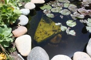 building a pond